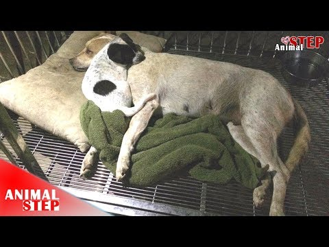 Little Puppy Crying Over Her Injured Mama – Watch Their Lives Being Together!