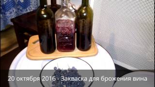 Закваска для брожения вина или что делать, если вино не бродит | Домашнее вино своими руками
