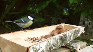 Meisen Am Futtertrog. Vögel Füttern Im Winter