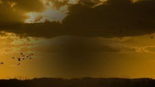 Johnny Norberg - Free (Blood Groove & Kikis Remix) [Silk Music]