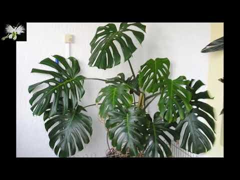 7 plantas de interior que necesitan poca luz