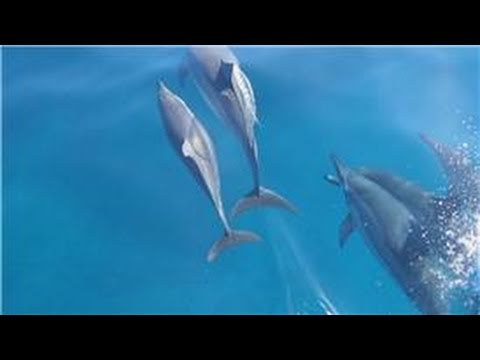 All About Dolphins : How Do Dolphins Protect Themselves?