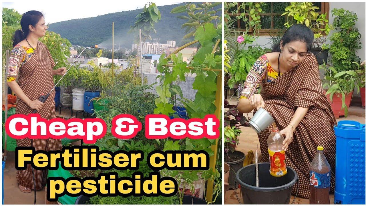 Fertiliser cum Pesticide for vegetable garden/ మొక్కల ఎదుగుదలకు మరియు చీడపీడల నివారణకు ఒకటే మందు