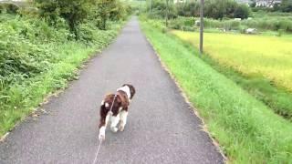 【ESS】ボールで遊ぶ犬 http://youtu.be/tDKK6X-qx8s 【ESS】光に噛み付...