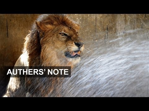 Africa's lion market | Authers' Note