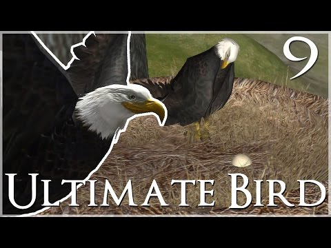 Our First Eagle Egg!! 🐦 Ultimate Bird Simulator - Episode #9