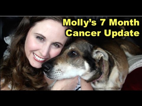 Molly's Cancer Update: 7 Months post amputation