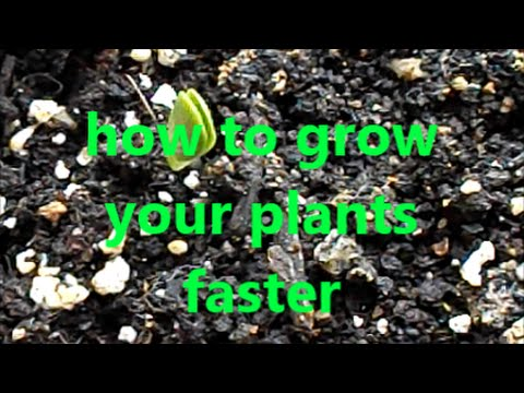 how to make my plant grow faster