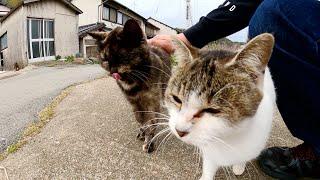 猫島で一休みしていたら、元気な猫達に包囲された