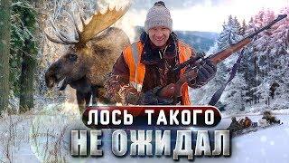 Охота на лося. Как пристрелять карабин перед охотой. Зимняя охота с Sabatti Saphire. (часть 1)