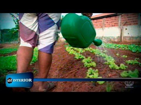 Terreno usado para descarte de entulho se transforma em horta comunitária em Araçatuba