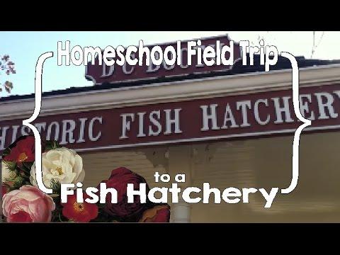 Homeschool Field Trip To A Fish Hatchery