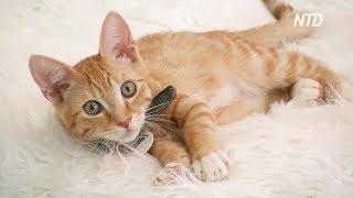Как кафе в США пристраивает кошек из приюта