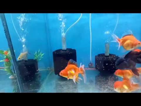 Fish store tour on CARTIMAR PET CENTER MANILA