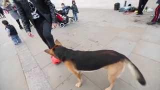 Человек играет в футбол  против собаки