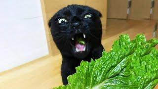 Лучшие смешные видео с домашними животными Симпатичные Кошки и Собаки Реакции смешные животные