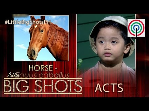 Little Big Shots Philippines: Kian | 4-year-old Little Animal Lover and Scientific Name Expert