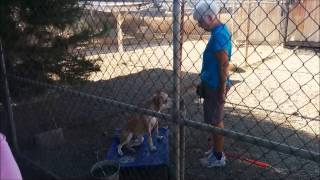 Carl Dog Training #1 (calming, Entering, Leashing, Exiting The Kennel)