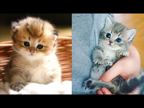 Baby Cats - Cute and Funny Cat Videos Compilation #31 | Aww Animals