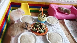 Пицца и торт для хомяков. День рождения.