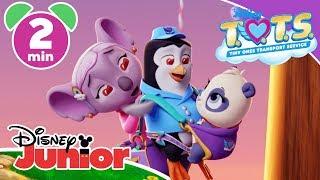 Download T.O.T.S. | Magical Moment: Panda Express ✨ | Disney Junior UK