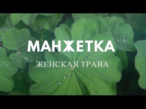 сибех - Заметки на полях