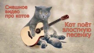 Смешное видео про котов. Кот поет злостную песенку