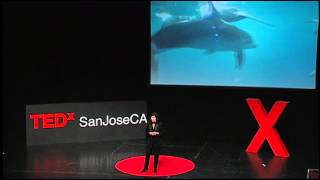 Thinking dolphin: Diana Reiss at TEDxSanJoseCA 2012