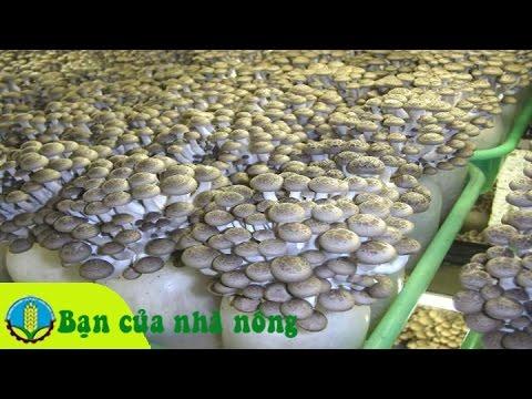 Mô hình, kỹ thuật trồng nấm từ phế phẩm nông nghiệp