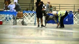 8-17-2014 Memphis Kennel Club - Sporting Group
