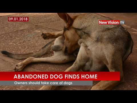 Abandoned dog finds home