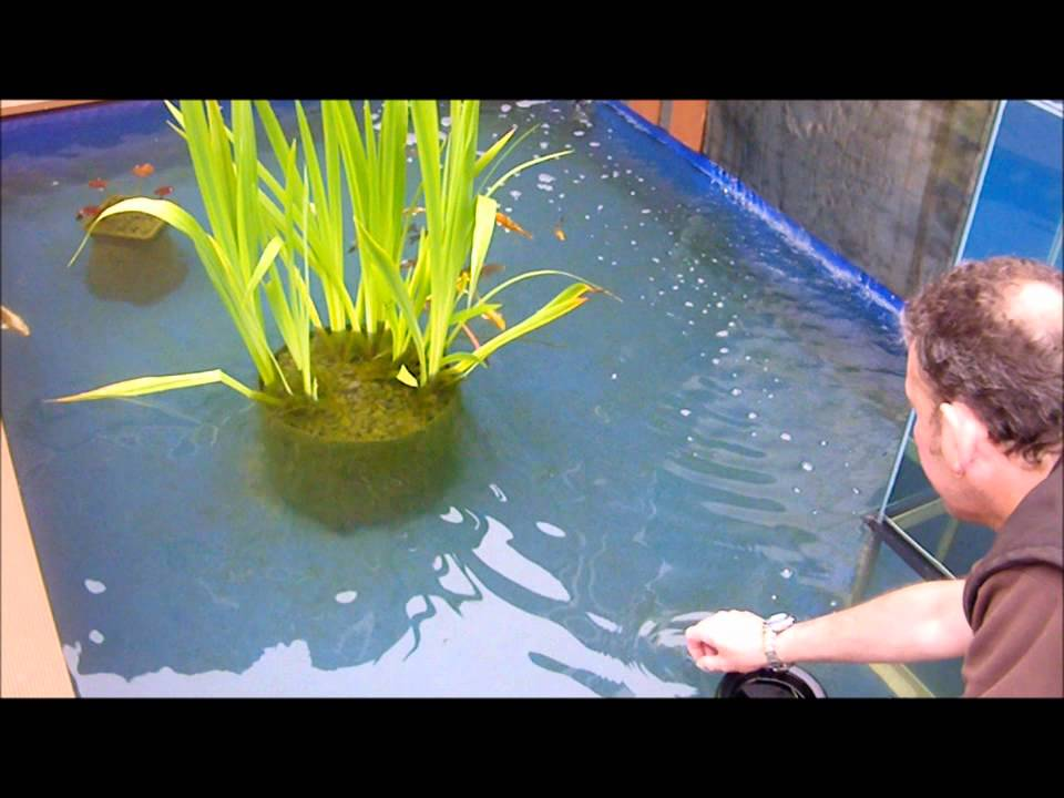 Upside down fish tank on pond youtube for Youtube fish tank