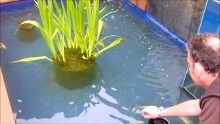 Upside Down Fish Tank on Pond