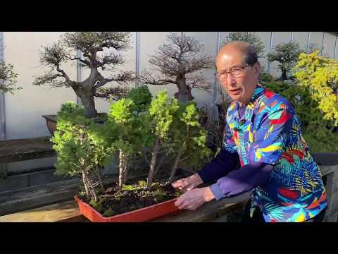 Making An Oak Bonsai Youtube