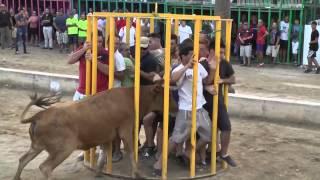 Spanish Bull obtrudes a cage