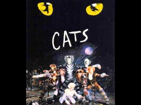 Cats Part 1