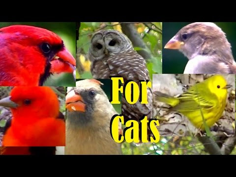 Beautiful Birds Chirping & Singing, Entertainment Videos For Cats and Dogs To Watch,