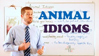 Idiom Series - Animal Idioms