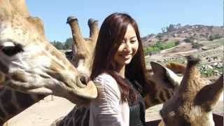 サファリ・ツアーでキリンとキス!?:JAL on YouTube サンディエゴ特集...