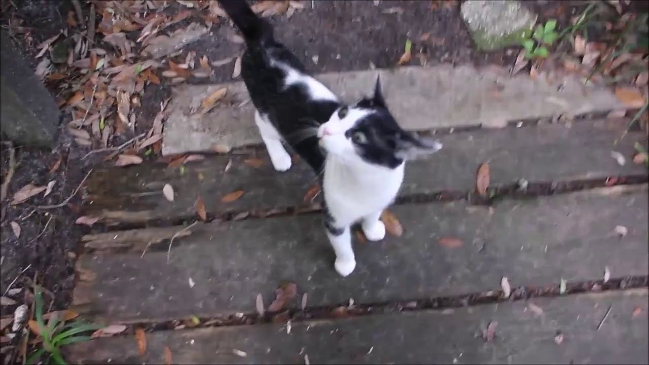 Rescued Cat | Soulpatch explores the great outdoors - YouTube