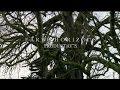 "Eco Eye Series 12 - Episode 2 - ""Woodlands"""