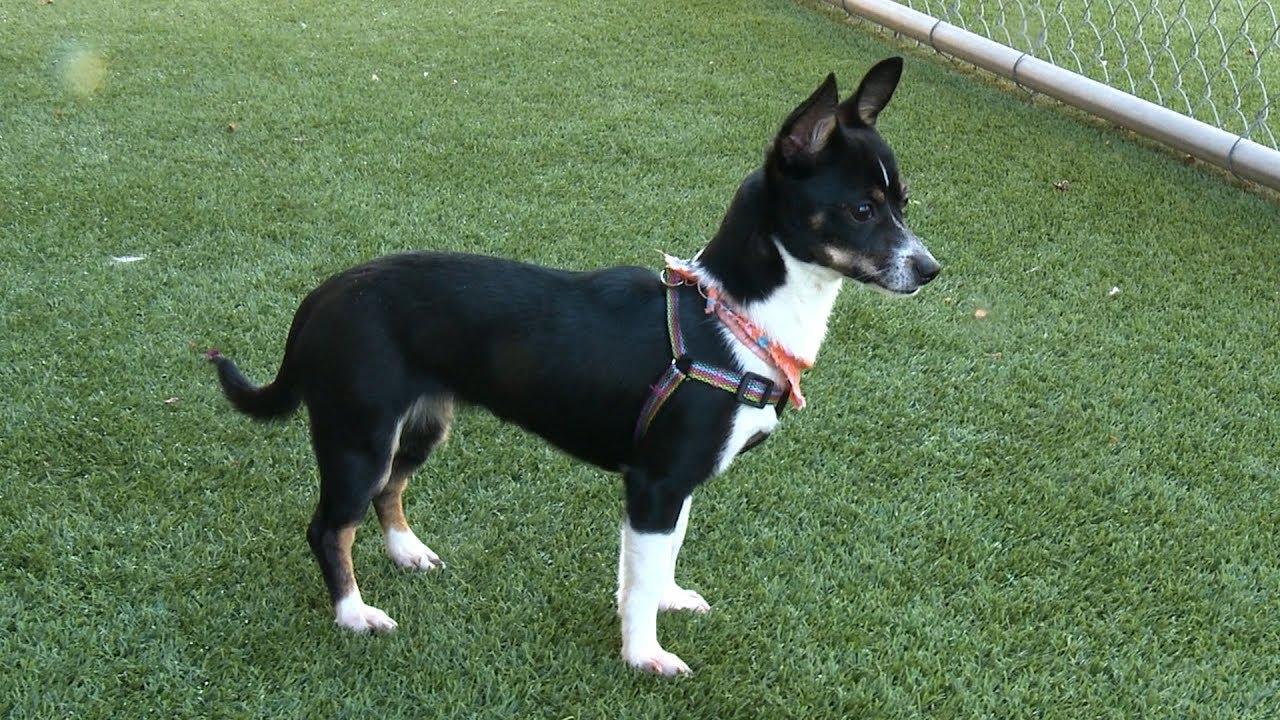 Pets of the Week – Meet Mindy & Charlotte - City of Arlington