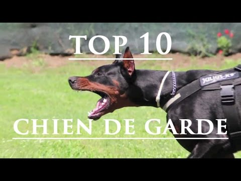 top 10 les chiens de garde youtube. Black Bedroom Furniture Sets. Home Design Ideas