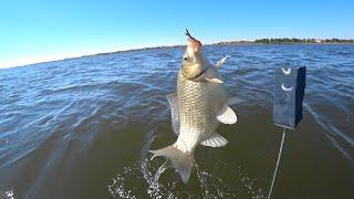 Осенняя ВОБЛА и крупный КАРАСЬ ЛАПТИ на Волге Осенняя рыбалка на донку с подпуском