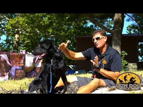 How To Teach Your Dog To Use A Layout Blind For Waterfowl  Hunting