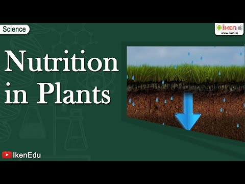 Nutrition in Plants - Iken Edu