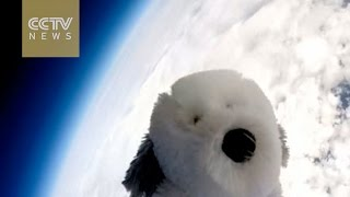 UK school appeals for toy dog 'Sam' lost in space