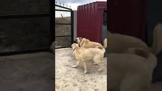 Alan koruma yapan yavrular