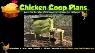 Building Plans For Chicken Coops (pretty Chicken Coops)