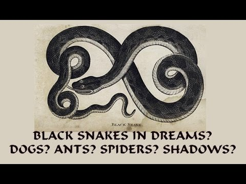 Black Snakes In Dreams Chasing Biting Dogs Black Shadows